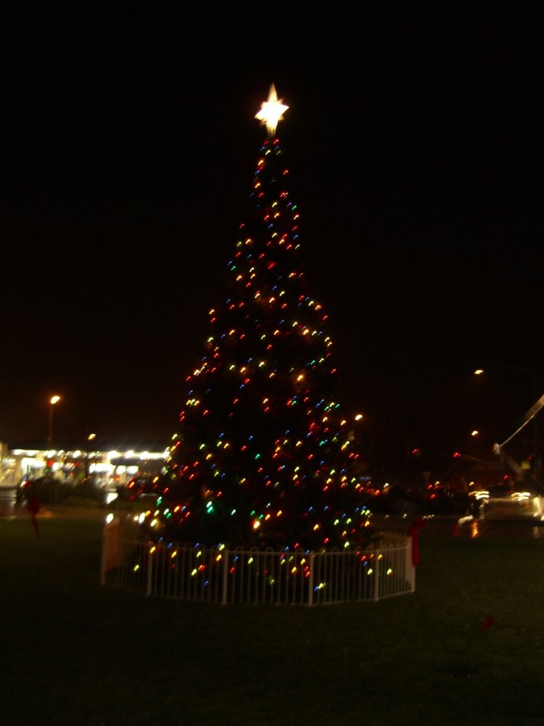 Cupertino Christmas Tree
